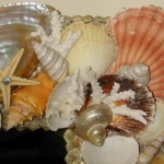 seashells-decor-ideas-easy12.jpg