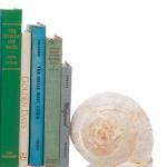 seashells-decor-ideas-easy8.jpg