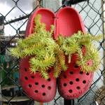 shoes-container-garden1-3.jpg