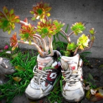 shoes-container-garden4-2.jpg