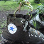 shoes-container-garden4-3.jpg