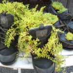 shoes-container-garden5-11.jpg