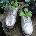 shoes-container-garden5-3.jpg