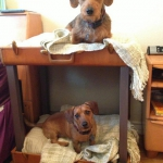 simple-diy-ideas-small-doggie-beds-in-suitcase10
