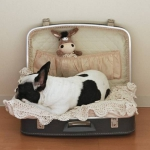 simple-diy-ideas-small-doggie-beds-in-suitcase8