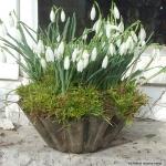 snowdrops-spring-decor-ideas7-2