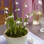 snowdrops-spring-decor-ideas9-1