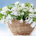 snowdrops-spring-decor-ideas9-3