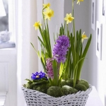 spring-flowers-new-ideas-narcissus12.jpg