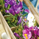 spring-flowers-new-ideas-snowdrops-and-crocus14.jpg