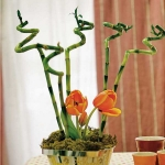spring-flowers-new-ideas-tulip2-11.jpg