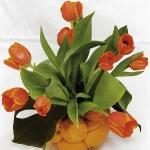 spring-flowers-new-ideas-tulip2-23.jpg