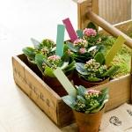 storage-labels-ideas-for-plants1.jpg