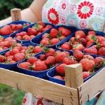 strawberry-season-dessert15.jpg