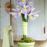 summer-flowers-variety12.jpg