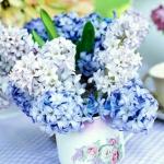 summer-flowers-variety4.jpg