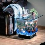 unusual-fish-tanks-ideas1-5.jpg