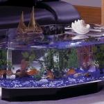 unusual-fish-tanks-ideas1-7.jpg