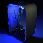 unusual-fish-tanks-ideas6-2.jpg