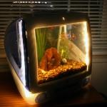 unusual-fish-tanks-ideas7-2.jpg