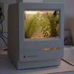 unusual-fish-tanks-ideas7-3.jpg