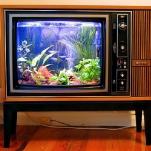 unusual-fish-tanks-ideas7-4.jpg