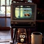 unusual-fish-tanks-ideas7-5.jpg