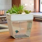 unusual-fish-tanks-ideas8-1.jpg
