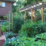 vegetable-garden-ideas1-12.jpg