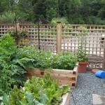 vegetable-garden-ideas1-5.jpg