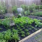 vegetable-garden-ideas2-3.jpg