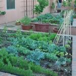 vegetable-garden-ideas4-2.jpg