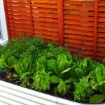 vegetable-garden-ideas5-2.jpg