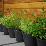 vegetable-garden-ideas6-1.jpg