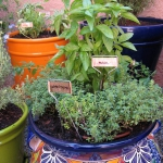 vegetable-garden-ideas6-2.jpg