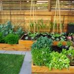 vegetable-garden-paths-ideas5.jpg