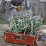 vintage-garden-pots1-12.jpg
