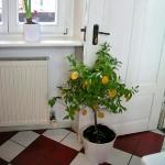 vintage-kitchens-by-ariana2-10.jpg