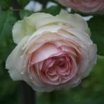 vintage-rose-inspiration-garden4.jpg