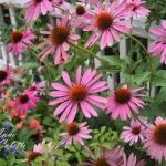 vintage-rose-inspiration-garden8.jpg