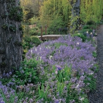 wild-garden-inspiration-flowers1.jpg