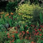 wild-garden-inspiration-flowers12.jpg