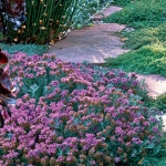 wild-garden-inspiration-flowers6.jpg