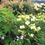 wild-garden-inspiration-flowers7.jpg