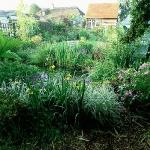 wild-garden-inspiration-herbs1.jpg