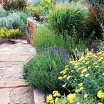 wild-garden-inspiration-herbs2.jpg