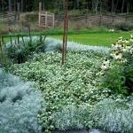 wild-garden-inspiration-herbs6.jpg