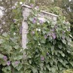 wild-garden-inspiration-liana1.jpg