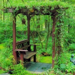 wild-garden-inspiration-liana3.jpg