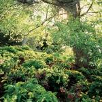 wild-garden-inspiration-naturalness6.jpg
